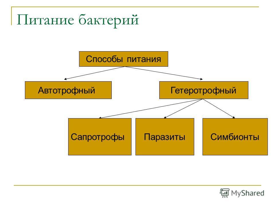Питание бактерий Способы питания АвтотрофныйГетеротрофный СапротрофыПаразитыСимбионты