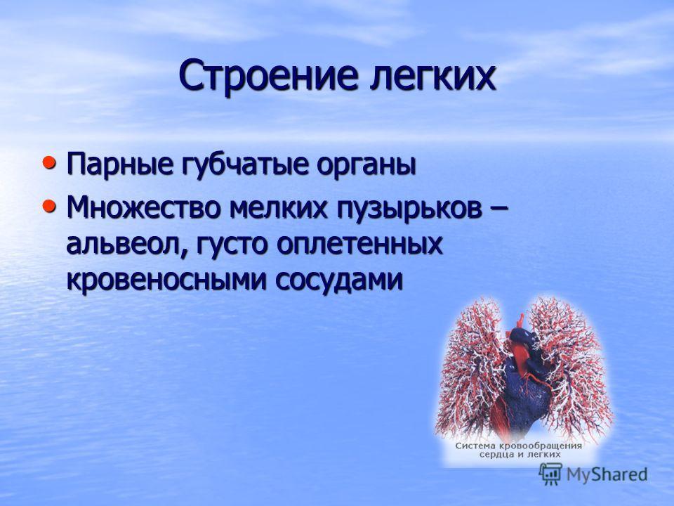 Строение легких Парные губчатые органы Парные губчатые органы Множество мелких пузырьков – альвеол, густо оплетенных кровеносными сосудами Множество мелких пузырьков – альвеол, густо оплетенных кровеносными сосудами
