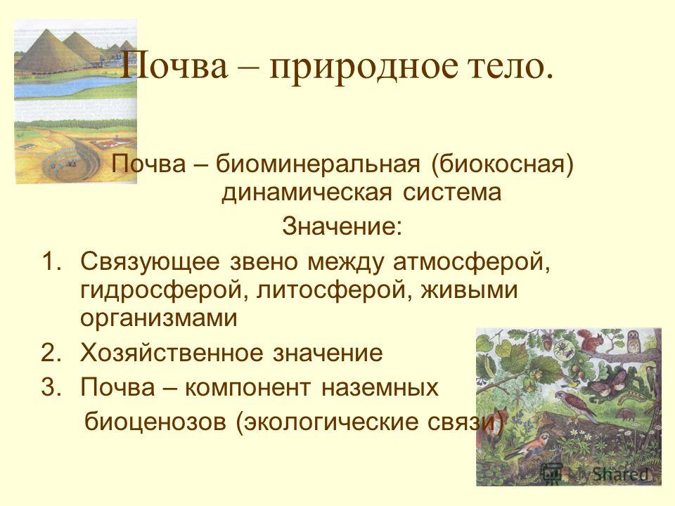 Почва – природное тело. Почва – биоминеральная (биокосная) динамическая система Значение: 1.Связующее звено между атмосферой, гидросферой, литосферой, живыми организмами 2.Хозяйственное значение 3.Почва – компонент наземных биоценозов (экологические