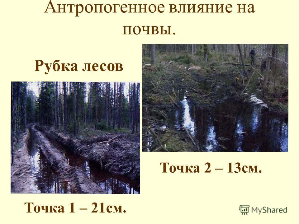 Антропогенное влияние на почвы. Рубка лесов Точка 1 – 21см. Точка 2 – 13см.