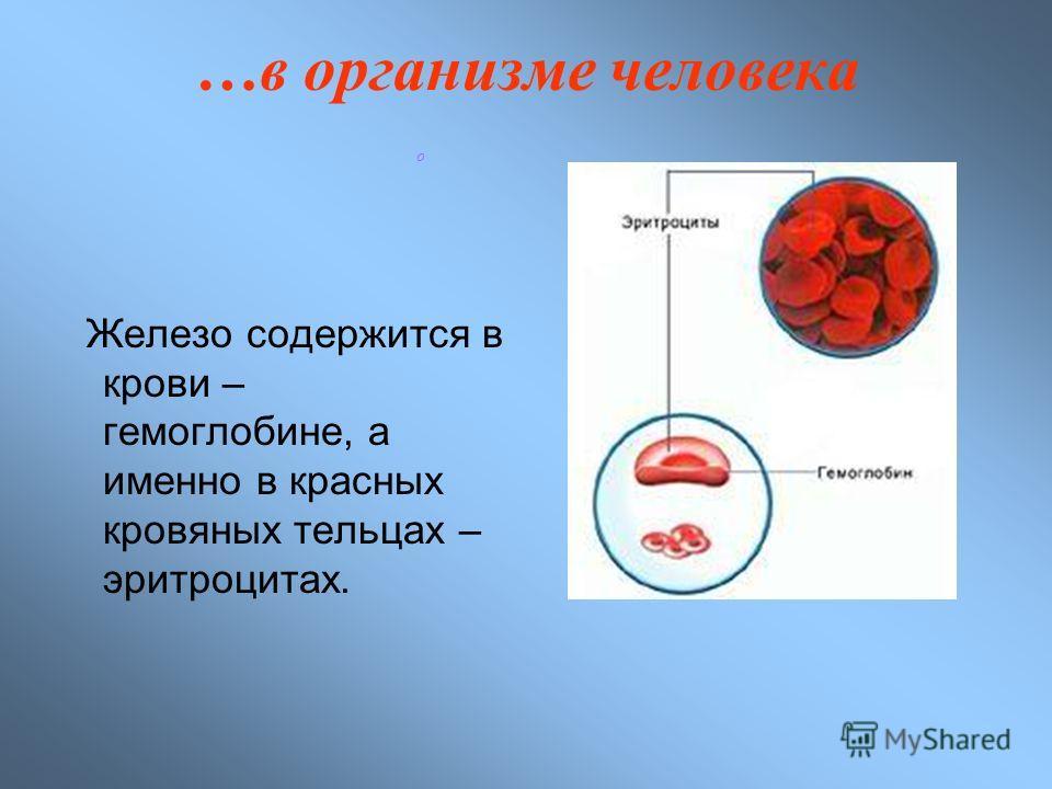 …в организме человека Железо содержится в крови – гемоглобине, а именно в красных кровяных тельцах – эритроцитах. о