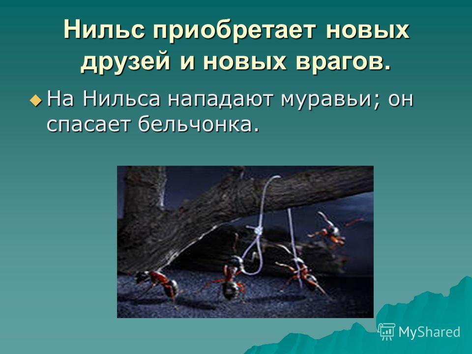 Нильс приобретает новых друзей и новых врагов. На Нильса нападают муравьи; он спасает бельчонка. На Нильса нападают муравьи; он спасает бельчонка.