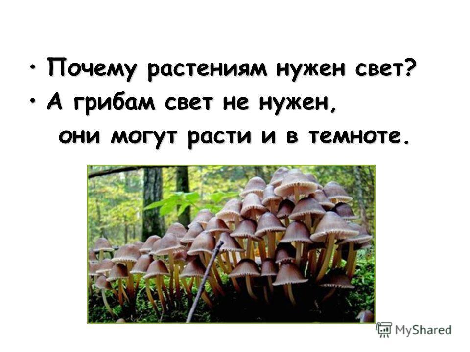 Почему растениям нужен свет?Почему растениям нужен свет? А грибам свет не нужен,А грибам свет не нужен, они могут расти и в темноте. они могут расти и в темноте.
