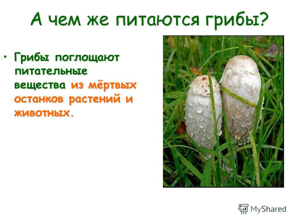 А чем же питаются грибы? Грибы поглощают питательные вещества из мёртвых останков растений и животных.Грибы поглощают питательные вещества из мёртвых останков растений и животных.