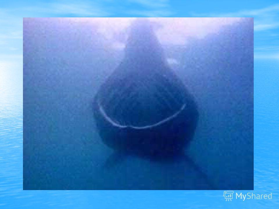 акула-нянька, Верхний ряд, слева направо: китовая акула, акула-нянька, гигантская акула белая акула-людоед, атлантическая серо-голубая акула (мако), Нижний ряд – белая акула-людоед, атлантическая серо-голубая акула (мако), обыкновенная морская лисица