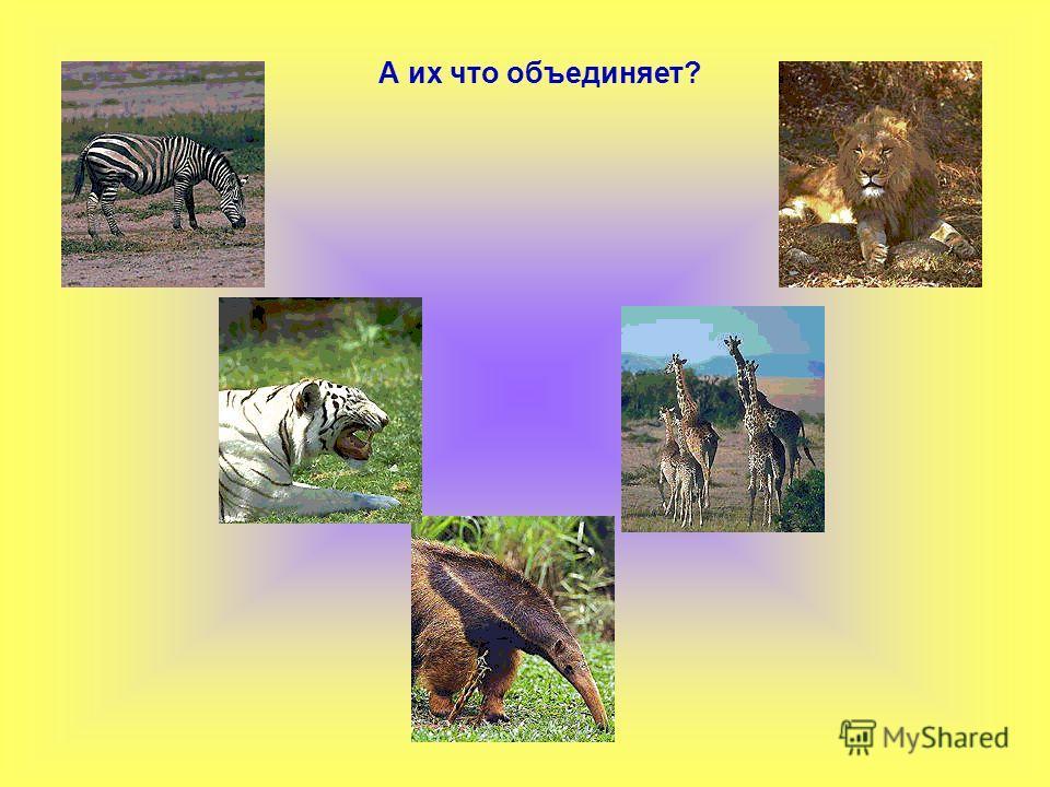 Что объединяет этих животных? Место обитания
