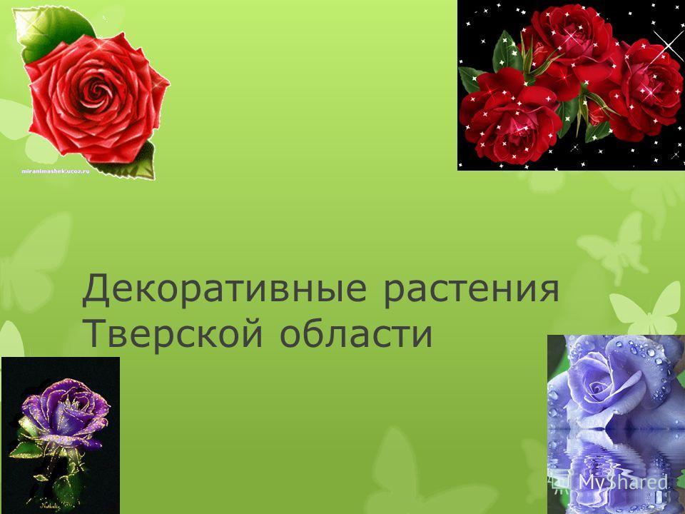 Декоративные растения Тверской области