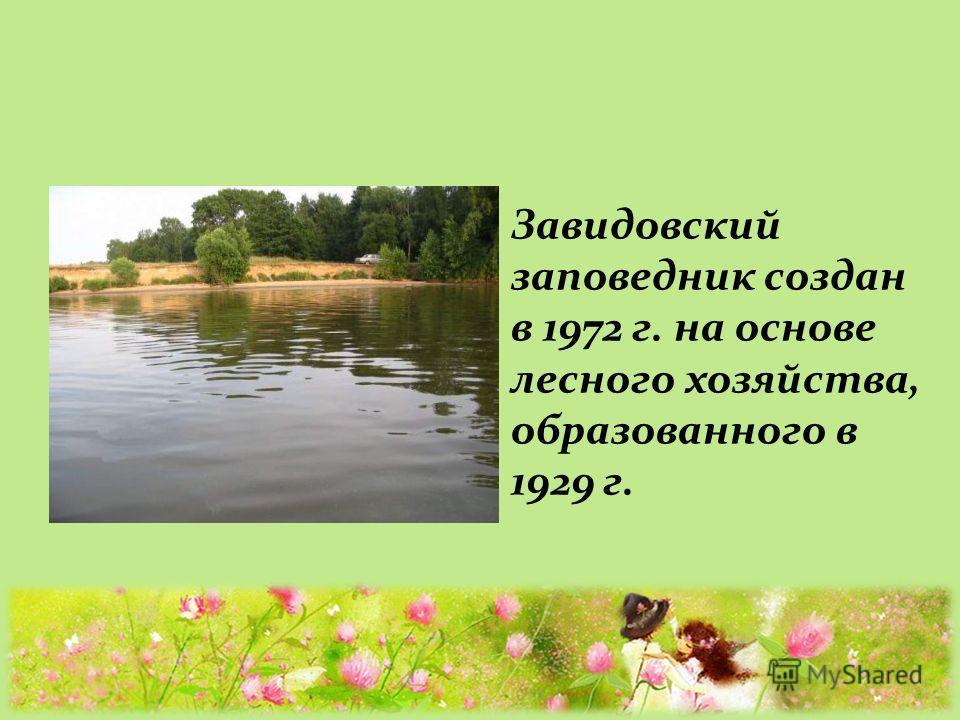 Завидовский заповедник создан в 1972 г. на основе лесного хозяйства, образованного в 1929 г.