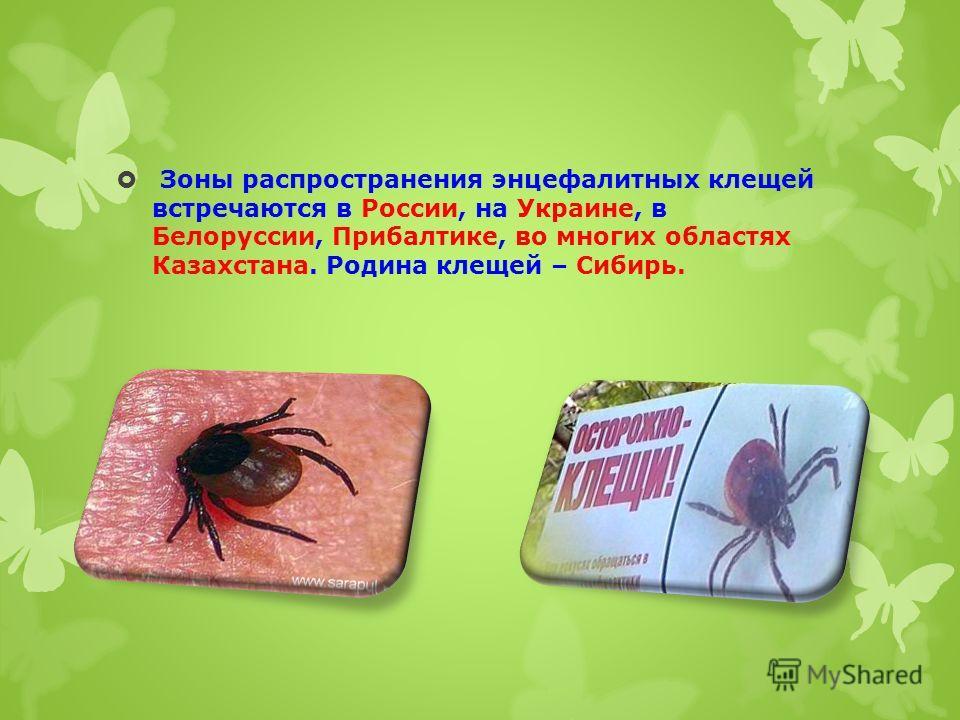 Зоны распространения энцефалитных клещей встречаются в России, на Украине, в Белоруссии, Прибалтике, во многих областях Казахстана. Родина клещей – Сибирь.
