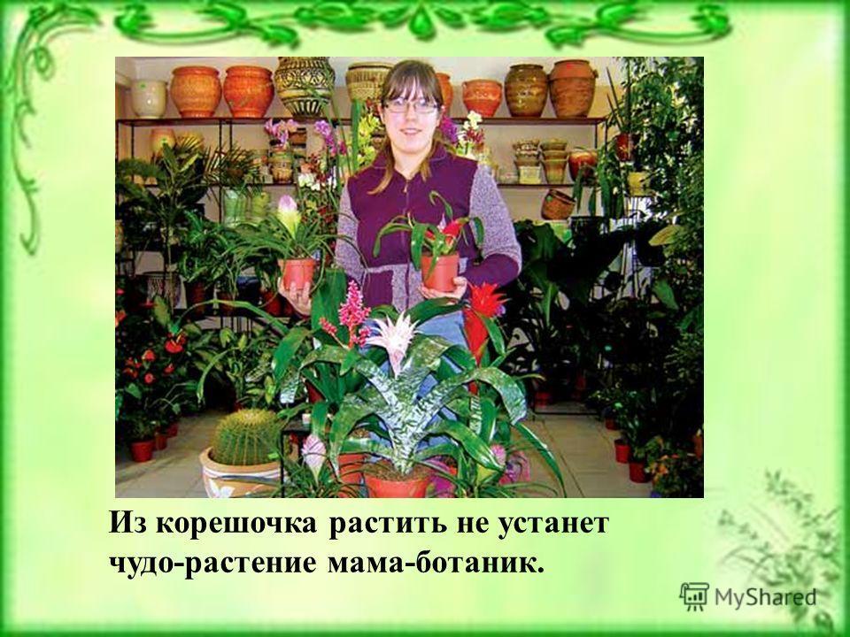 Из корешочка растить не устанет чудо-растение мама-ботаник.