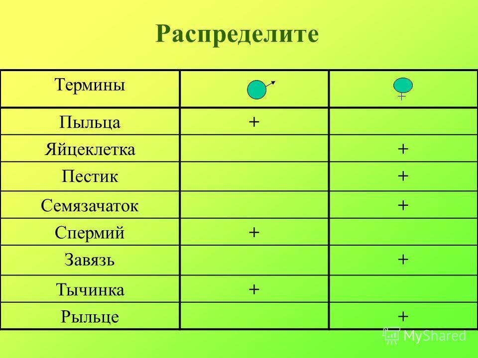 Распределите Термины Пыльца+ Яйцеклетка+ Пестик+ Семязачаток+ Спермий+ Завязь+ Тычинка+ Рыльце+