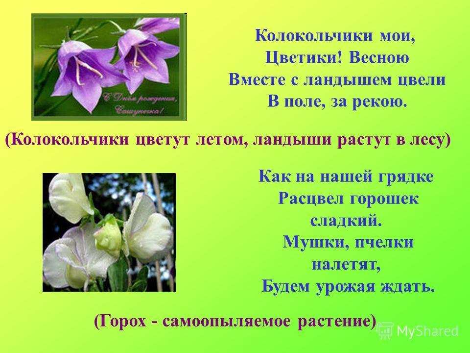 Колокольчики мои, Цветики! Весною Вместе с ландышем цвели В поле, за рекою. (Колокольчики цветут летом, ландыши растут в лесу) Как на нашей грядке Расцвел горошек сладкий. Мушки, пчелки налетят, Будем урожая ждать. (Горох - самоопыляемое растение)