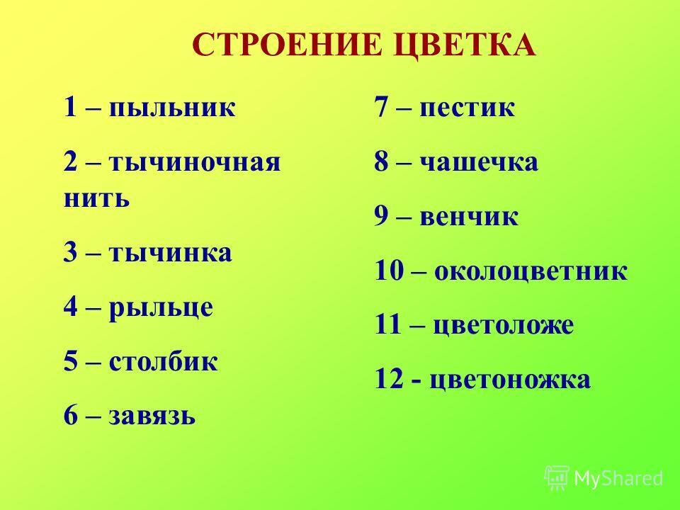 СТРОЕНИЕ ЦВЕТКА 1 – пыльник 2 – тычиночная нить 3 – тычинка 4 – рыльце 5 – столбик 6 – завязь 7 – пестик 8 – чашечка 9 – венчик 10 – околоцветник 11 – цветоложе 12 - цветоножка