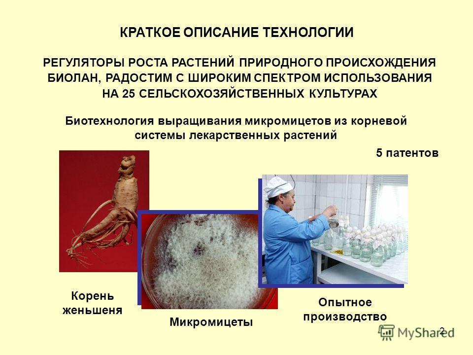 2 РЕГУЛЯТОРЫ РОСТА РАСТЕНИЙ ПРИРОДНОГО ПРОИСХОЖДЕНИЯ БИОЛАН, РАДОСТИМ С ШИРОКИМ СПЕКТРОМ ИСПОЛЬЗОВАНИЯ НА 25 СЕЛЬСКОХОЗЯЙСТВЕННЫХ КУЛЬТУРАХ Биотехнология выращивания микромицетов из корневой системы лекарственных растений 5 патентов Корень женьшеня М