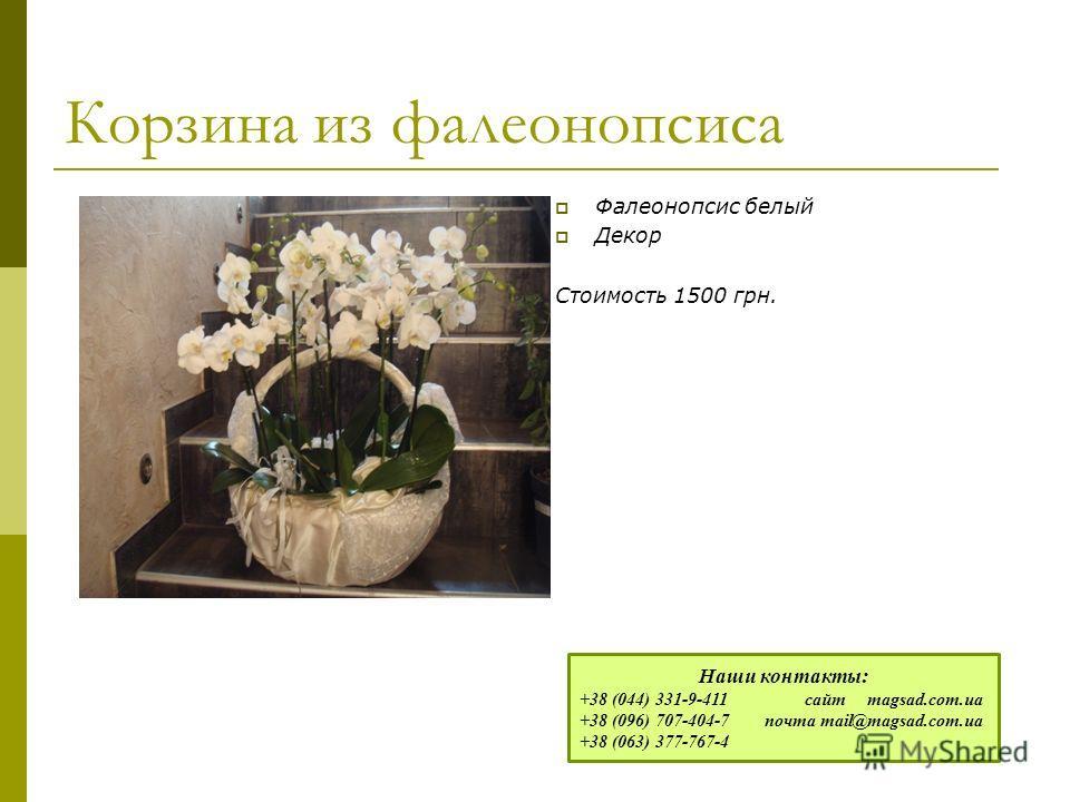 Корзина из фалеонопсиса Фалеонопсис белый Декор Стоимость 1500 грн. Наши контакты: +38 (044) 331-9-411 сайт magsad.com.ua +38 (096) 707-404-7 почта mail@magsad.com.ua +38 (063) 377-767-4