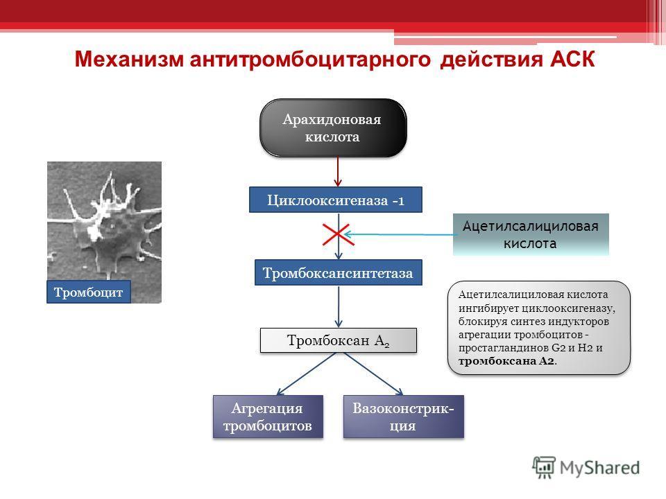 Арахидоновая кислота Тромбоцит Агрегация тромбоцитов Ацетилсалициловая кислота Циклооксигеназа -1 Тромбоксансинтетаза Вазоконстрик- ция Ацетилсалициловая кислота ингибирует циклооксигеназу, блокируя синтез индукторов агрегации тромбоцитов - простагла