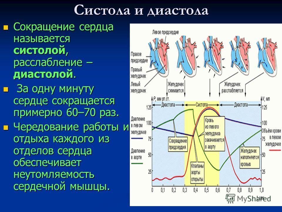 Систола и диастола Сокращение сердца называется систолой, расслабление – диастолой. Сокращение сердца называется систолой, расслабление – диастолой. За одну минуту сердце сокращается примерно 60–70 раз. За одну минуту сердце сокращается примерно 60–7
