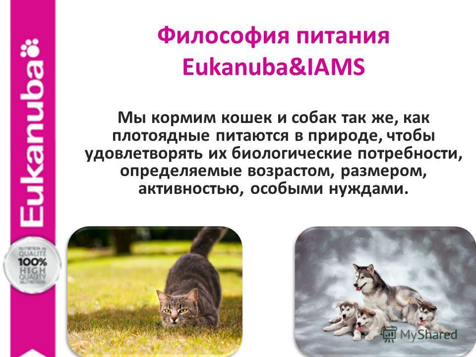 Философия питания Eukanuba&IAMS Мы кормим кошек и собак так же, как плотоядные питаются в природе, чтобы удовлетворять их биологические потребности, определяемые возрастом, размером, активностью, особыми нуждами.