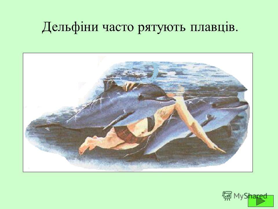 Касатки дуже розумні тварини. Вони, як і дельфіни, легко дресируються, виступають перед глядачами в дельфінаріях.