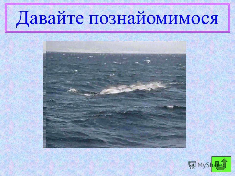 Дельфіни часто рятують плавців.
