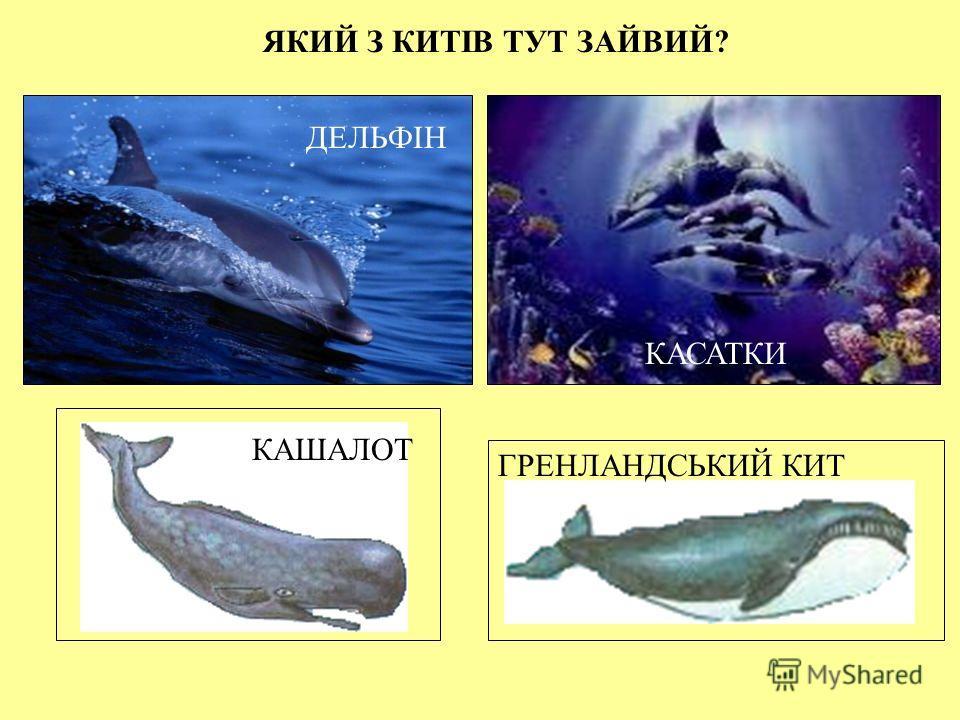 ПЛАНКТОН ПЛАНКТОН – крихітні рослини та тварини, що мешкають у воді. Рослинний планктон відомий під назвою морська трава. А великий планктон – це криль, який нагадує маленьких креветок. Багато китів живляться тільки крилем. Креветка Криль