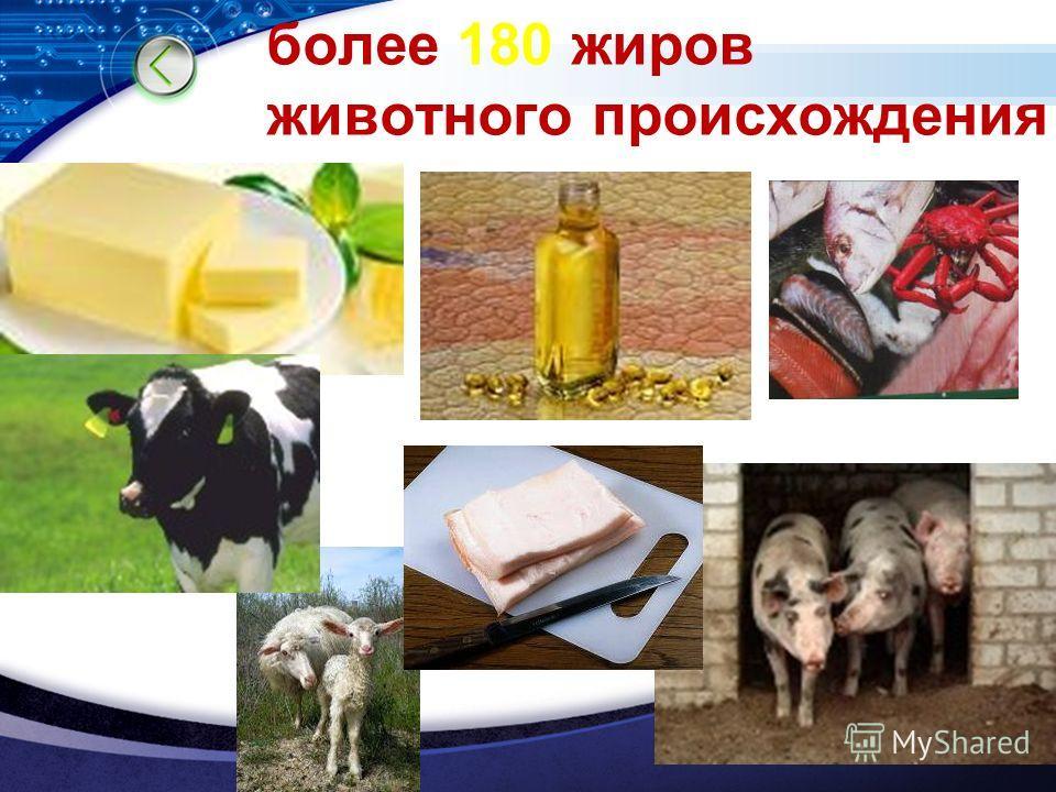 LOGO более 180 жиров животного происхождения