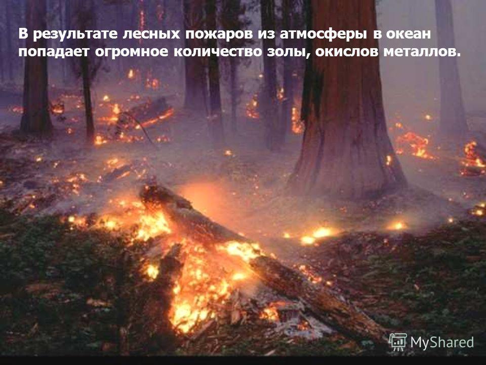 В результате лесных пожаров из атмосферы в океан попадает огромное количество золы, окислов металлов.