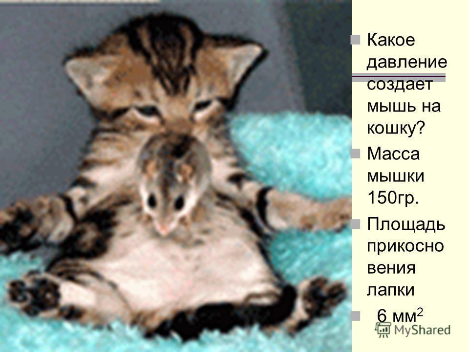 Какое давление создает мышь на кошку? Масса мышки 150гр. Площадь прикосно вения лапки 6 мм 2