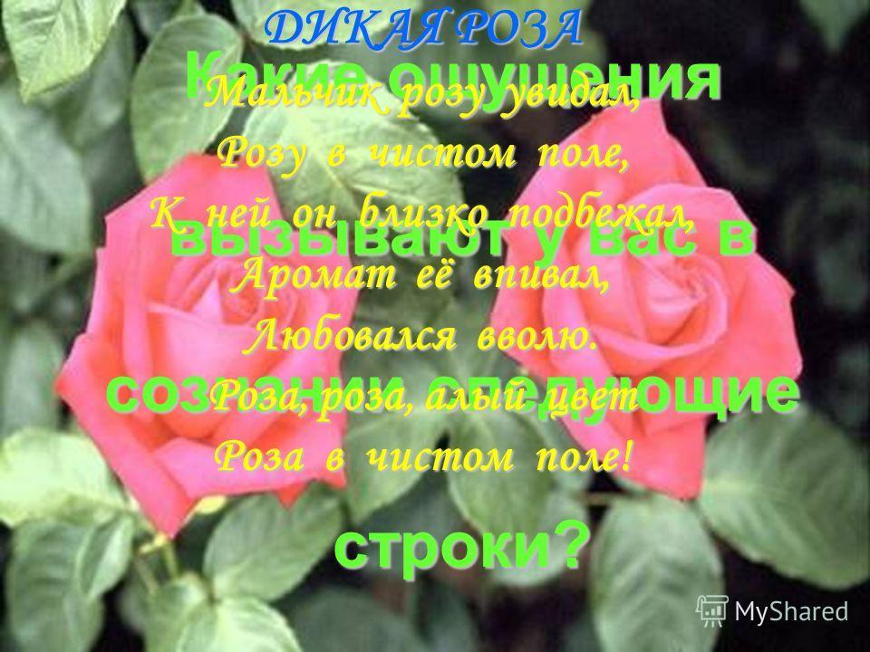 Какие ощущения вызывают у вас в сознании следующие строки? ДИКАЯ РОЗА Мальчик розу увидал, Розу в чистом поле, К ней он близко подбежал, Аромат её впивал, Любовался вволю. Роза, роза, алый цвет Роза в чистом поле!