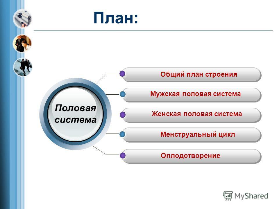 План: Общий план строения Мужская половая система Женская половая система Менструальный цикл Оплодотворение Половая система