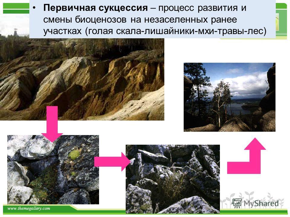 www.themegallery.com Первичная сукцессия – процесс развития и смены биоценозов на незаселенных ранее участках (голая скала-лишайники-мхи-травы-лес)