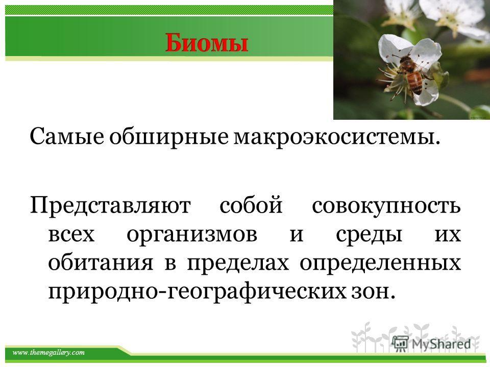 www.themegallery.com Самые обширные макроэкосистемы. Представляют собой совокупность всех организмов и среды их обитания в пределах определенных природно-географических зон.