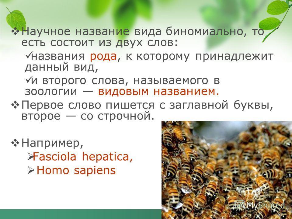 Научное название вида биномиально, то есть состоит из двух слов: названия рода, к которому принадлежит данный вид, и второго слова, называемого в зоологии видовым названием. Первое слово пишется с заглавной буквы, второе со строчной. Например, Fascio