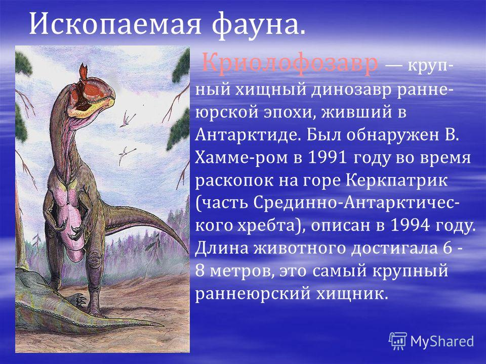 Ископаемая фауна. Криолофозавр круп- ный хищный динозавр ранне- юрской эпохи, живший в Антарктиде. Был обнаружен В. Хамме-ром в 1991 году во время раскопок на горе Керкпатрик (часть Срединно-Антарктичес- кого хребта), описан в 1994 году. Длина животн