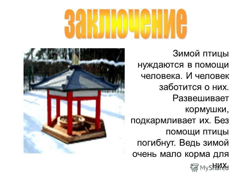 Зимой птицы нуждаются в помощи человека. И человек заботится о них. Развешивает кормушки, подкармливает их. Без помощи птицы погибнут. Ведь зимой очень мало корма для них.