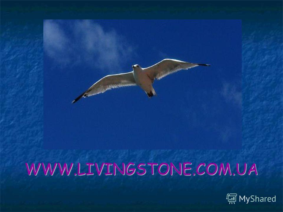 WWW.LIVINGSTONE.COM.UA
