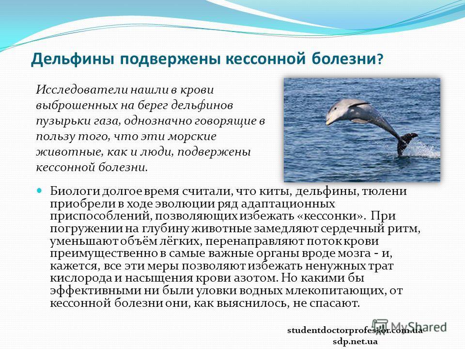 Дельфины подвержены кессонной болезни ? Исследователи нашли в крови выброшенных на берег дельфинов пузырьки газа, однозначно говорящие в пользу того, что эти морские животные, как и люди, подвержены кессонной болезни. Биологи долгое время считали, чт