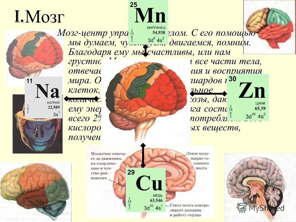 I. Мозг Мозг-центр управления телом. С его помощью мы думаем, чувствуем, двигаемся, помним. Благодаря ему мы счастливы, или нам грустно. Мозг контролирует все части тела, отвечает за процесс мышления и восприятия мира. Он содержит 100 миллиардов нерв