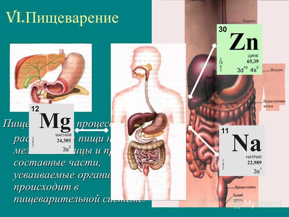 VI. Пищеварение Пищеварение - процесс расщепления пищи на мелкие частицы и простые составные части, усваиваемые организмом; происходит в пищеварительной системе. расщепления пищи на мелкие частицы и простые составные части, усваиваемые организмом; пр