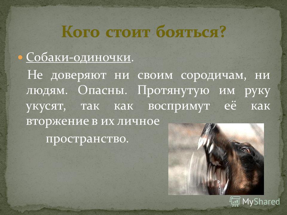 Собаки-одиночки. Не доверяют ни своим сородичам, ни людям. Опасны. Протянутую им руку укусят, так как воспримут её как вторжение в их личное пространство.