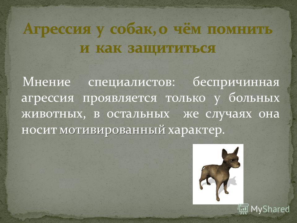 мотивированный Мнение специалистов: беспричинная агрессия проявляется только у больных животных, в остальных же случаях она носит мотивированный характер.