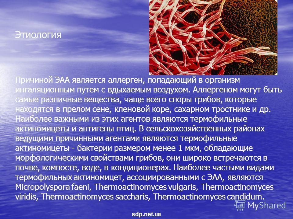 Причиной ЭАА является аллерген, попадающий в организм ингаляционным путем с вдыхаемым воздухом. Аллергеном могут быть самые различные вещества, чаще всего споры грибов, которые находятся в прелом сене, кленовой коре, сахарном тростнике и др. Наиболее