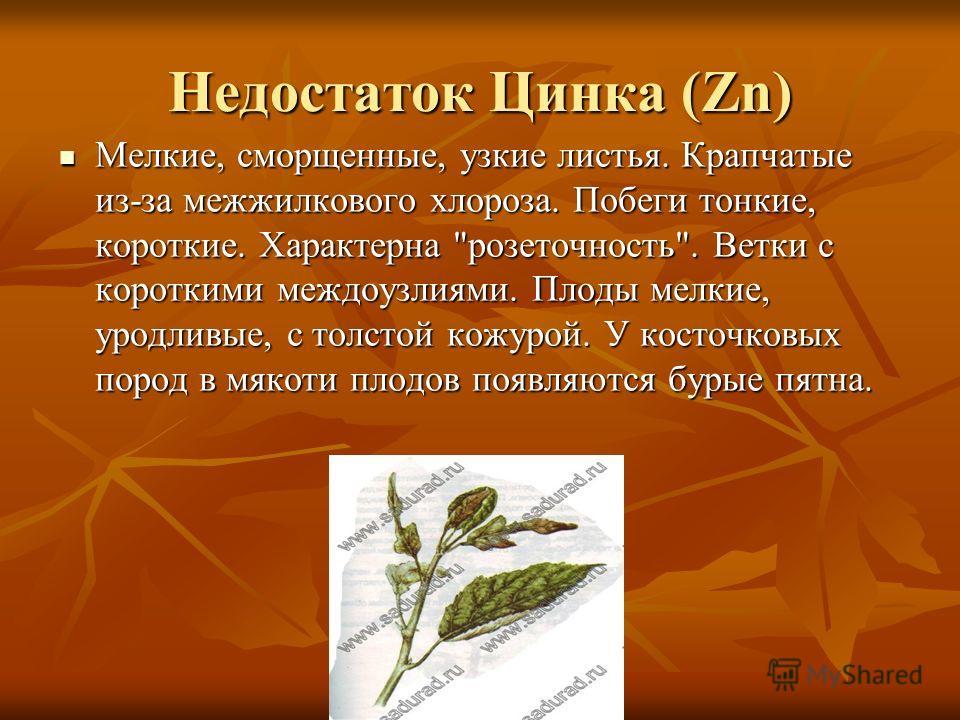 Недостаток Цинка (Zn) Мелкие, сморщенные, узкие листья. Крапчатые из-за межжилкового хлороза. Побеги тонкие, короткие. Характерна