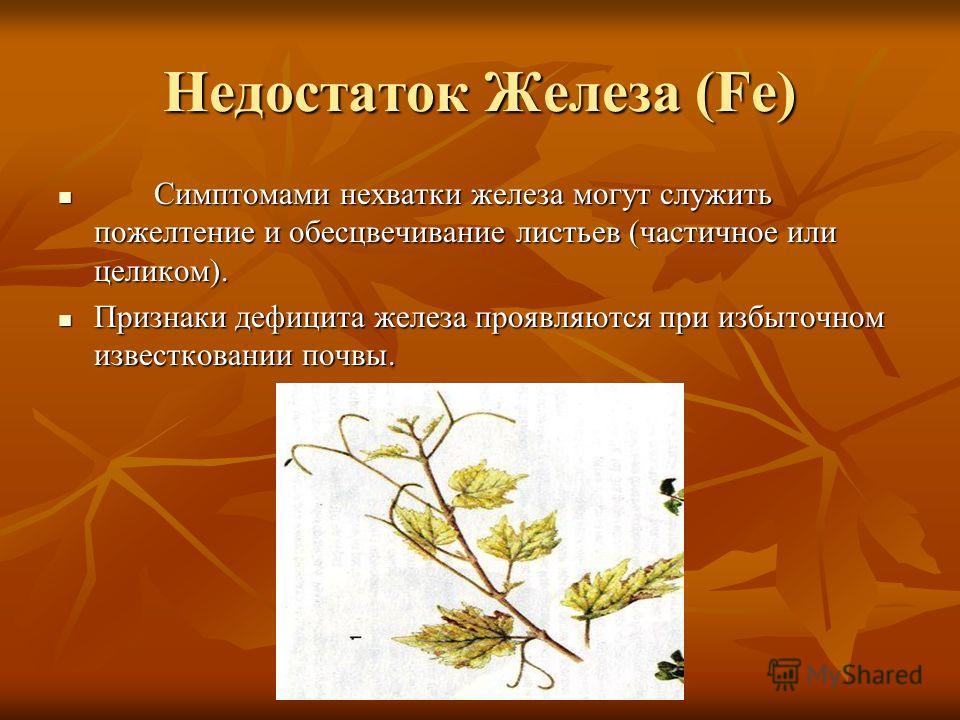 Недостаток Железа (Fe) Симптомами нехватки железа могут служить пожелтение и обесцвечивание листьев (частичное или целиком). Симптомами нехватки железа могут служить пожелтение и обесцвечивание листьев (частичное или целиком). Признаки дефицита желез