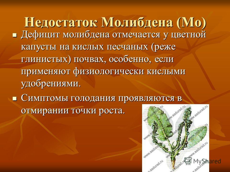 Недостаток Молибдена (Мо) Дефицит молибдена отмечается у цветной капусты на кислых песчаных (реже глинистых) почвах, особенно, если применяют физиологически кислыми удобрениями. Дефицит молибдена отмечается у цветной капусты на кислых песчаных (реже