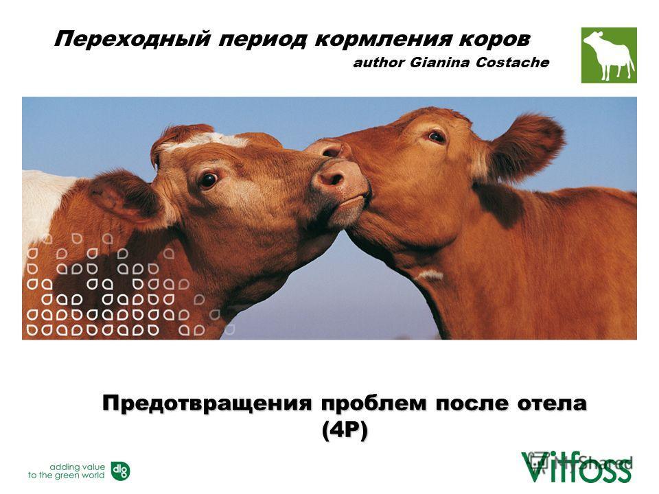 Предотвращения проблем после отела (4P) Переходный период кормления коров author Gianina Costache