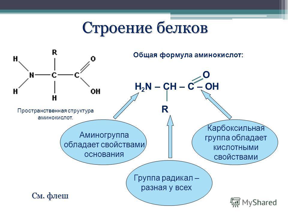 Пространственная структура аминокислот. Общая формула аминокислот: О H 2 N – CH – C – OH R Аминогруппа обладает свойствами основания Группа радикал – разная у всех Карбоксильная группа обладает кислотными свойствами Строение белков См. флеш