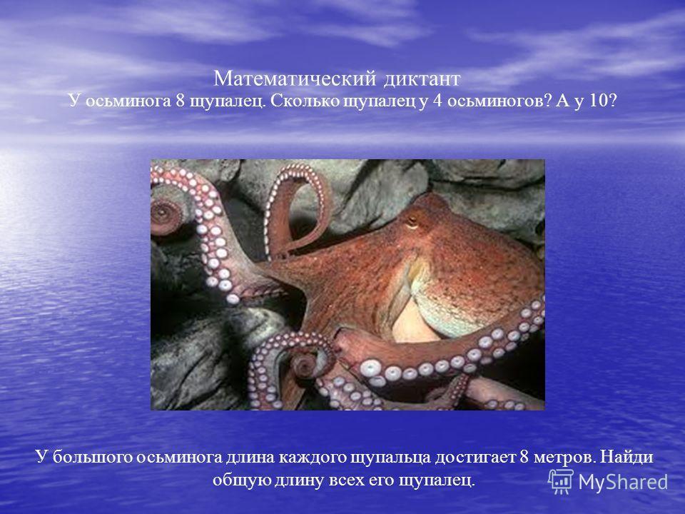Математический диктант У осьминога 8 щупалец. Сколько щупалец у 4 осьминогов? А у 10? У большого осьминога длина каждого щупальца достигает 8 метров. Найди общую длину всех его щупалец.