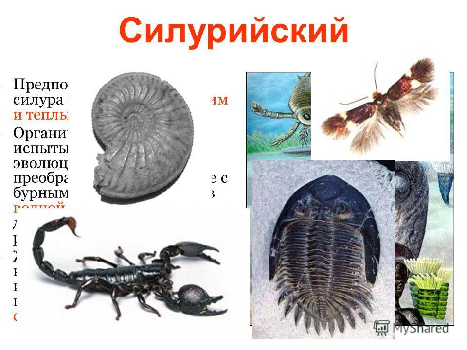 Силурийский Предполагают, что климат силура был довольно мягким и теплым. Органический мир силура испытывает дальнейшие эволюционные преобразования, связанные с бурным развитием жизни в водной среде. Появляются древние хрящевые и костные рыбы. Жизнь
