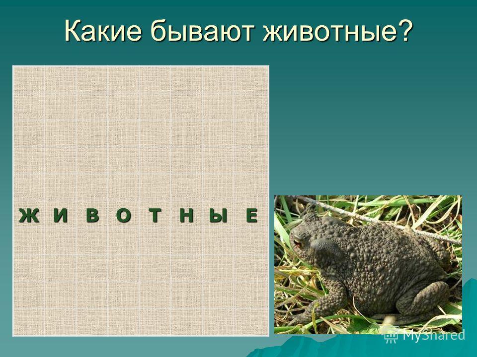 Какие бывают животные? ЖИВОТНЫЕ